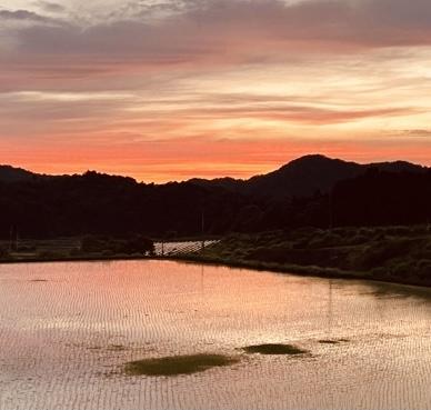 久美浜のコシヒカリ田植え終わりました